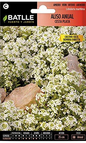 Semillas de Flores - Aliso Anual cesta de plata - Batlle