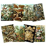Ernst Haeckel Kunstformen Der Natur Plates Nature Vintage