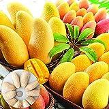 AchidistviQ 10 Stück Mangobaum Seltene Samen Köstliche Obstpflanze Hausgarten Hinterhof Farm 10 Stück Mangosamen