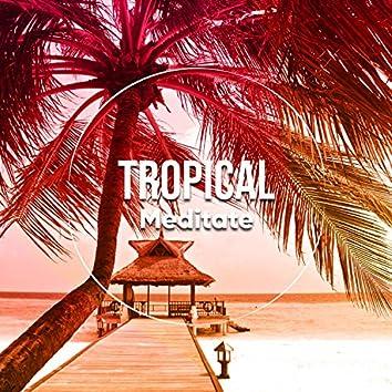 # 1 Album: Tropical Meditate