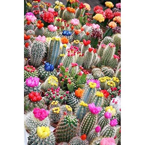 N / A 5D-Diamond Painting Round Diamond Picture Diamond Embroidery Cactus Plant Flower DIY Rhinestone Mosaic Cross Stitch Home Decoration Still Life Picture Handmade Crafts-40X50Cm