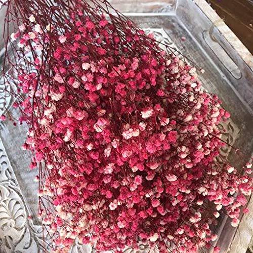 Paniculata preservada Color Rosa.Ramo Novia