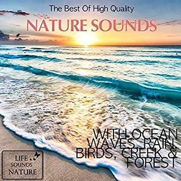 The Best Of High Quality Nature Sounds With Ocean Waves, Rain, Birds, Creek & Forest