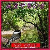 渓流や鳥の音: 自然の音