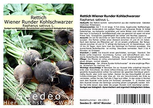 Seedeo® Rettich Wiener Runder Kohlschwarzer (Raphanus sativus L.)100 Samen BIO
