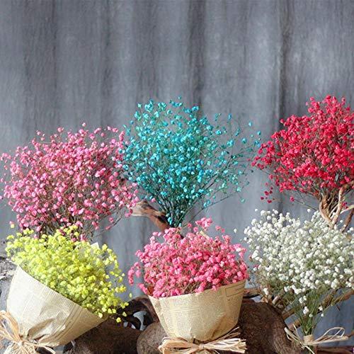 Renquen - Ramo de flores secas naturales, 40 x 20 cm