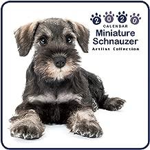 The Dog Mini Wall Calendar 2020 Miniature Schnauzer
