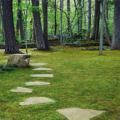 500pcs bonsaï graines de plantes vertes - graines de gazon - graminées vivaces graine végétale décoration extérieure .garden A05 plante