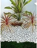 Jardin202 20/25 - Canto rodado Blanco Piedra de mármol | 25kg | Piedras Decorativas para Jardín o Espacios Exteriores