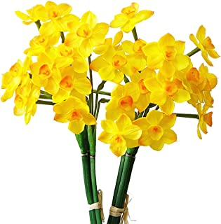 Best silk daffodils with bulbs Reviews