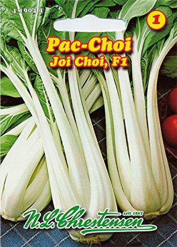 Asia Salat Pak Choi,Joi Choi F1 für ca. 80 Pflanzen
