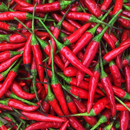 KEJORA Fresh Red Thai Chili Peppers