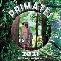 Primates 2021 Mini Wall Calendar