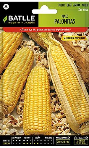 Batlle Kräutersamen - Pop Corn Mais (Samen - 180cm)