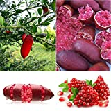 SHUNYUS 20 unids/Pack Dedo Naranja Semillas Rojo Naranja Semillas Planta Dedo Cal Pomegrante Semillas de Plantas
