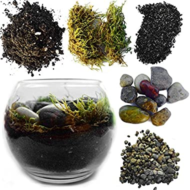 Complete Terrarium Kit: Succulent Planter With Soil and Glass + All Supplies for Succulent, Cactus, and Fairy Garden (Large Glass Globe, Height 6 inches - Width 8 Inches)