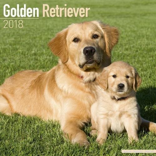 Golden Retriever Calendar - Calendar Golden Retriever - Golden Retrievers Calendar - Dog Breed Calendars 2018 - Dog Calendar - Calendars 2017 - 2018 wall calendars - 16 Month Wall Calendar by Avonside