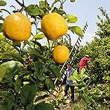 WELEDA Citrus Erfrischungsdusche, mit Zitronen Und Orangen Duft, 200ml - 2