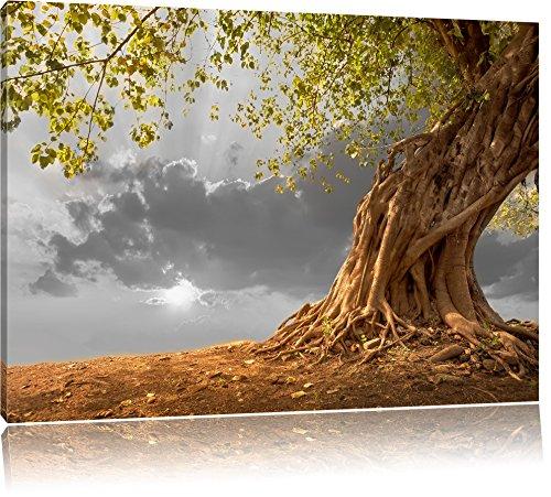 Pixxprint Baum als Leinwandbild | Größe: 100x70 cm | Wandbild| Kunstdruck | fertig bespannt
