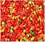 BIG PACK - (500) Bhut Jolokia, Ghost Pepper Seeds - 2007 as hottest chile pepper in the world at over 1 million Scoville unit- Non-GMO Seeds by MySeeds.Co (BIG PACK - Bhut Jolokia Ghost Pepper)