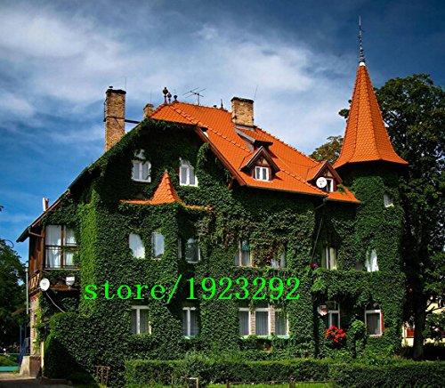 Big promotion HOT SALE Livraison gratuite, Fun vert Boston Ivy Graines Red Boston Ivy SeedsHome Jardinage 100pcs / lot gros, F