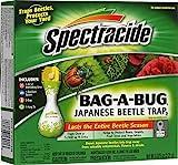Beetle Trap