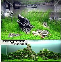 Natural garden plants Aquarium Random Aquatic Water Grass Seeds -500 Seed
