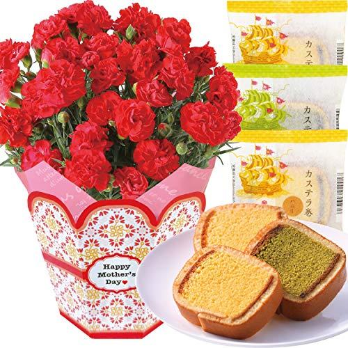 花のギフト社 母の日 カーネーション 文明堂 カステラ巻 花とスイーツ 鉢植え 鉢花 花 5号鉢