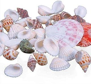 TOMMY LAMBERT Acuario Decoración Antiguo 100g Mezclado Playa Conchas Náuticas Acuario Pecera DIY Decoración Bulk Seashell