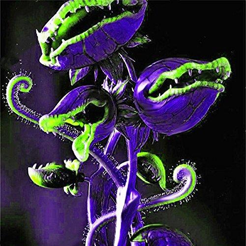 TENGGO Egrow 100 Teile/Paket Fliegenfalle Samen Garten Topf Dionaea Muscipula Riesen Fleischfressende Pflanzensamen - 3