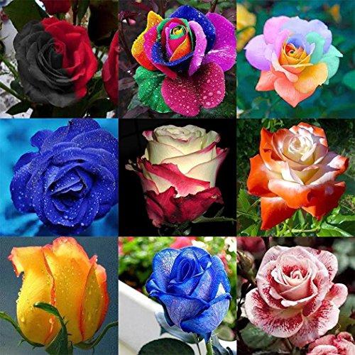 ADOLENB Seed House - 100 unidades Rare Rose Semillas Flores Semillas R