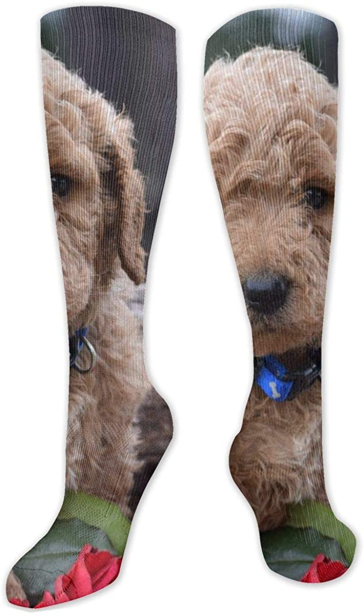 Goldendoodle Dogs Knee High Socks Leg Warmer Dresses Long Boot Stockings For Womens Cosplay Daily Wear