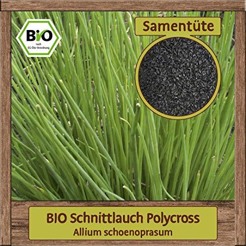 Samenliebe BIO Kräuter Samen Schnittlauch Polycross (Allium schoenoprasum) | BIO Schnittlauchsamen Kräutersamen | BIO Saatgut für ca. 5 m²