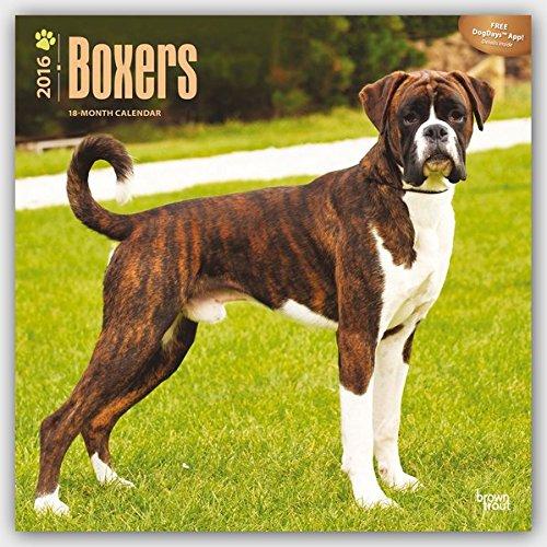 Boxers 2016 International - Boxer - 18-Monatskalender mit freier DogDays-App: Original BrownTrout-Ka