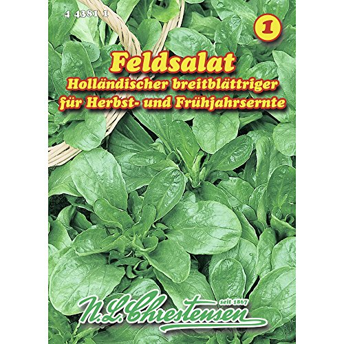 Saatgut Feldsalat Holländischer breitblättriger