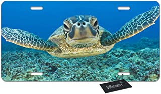 WONDERTIFY License Plate Lonely Sea Turtle Decorative Car Front License Plate,Vanity Tag,Metal Car Plate,Aluminum Novelty License Plate for Men/Women/Boy/Girls Car,6 X 12 Inch (4 Holes)