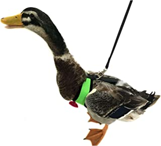 Yesito Chicken Harness Hen size With 6-foot Matching belt - Adjustable, elastic, Comfortable, Breathable, Small Size, Suitable for Chicken, Duck or Goose Suitable for Weight about 2.3-3.8Pounds, Green