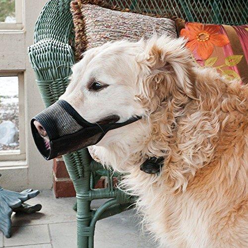 Coastal Pet Best Fit Dog Muzzle Size: 3