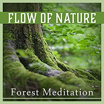 Flow of Nature – Forest Meditation: Constant Mindfulness, Blissful Unity, Mental Oasis, Tranquil Sounds, Heal Your Soul