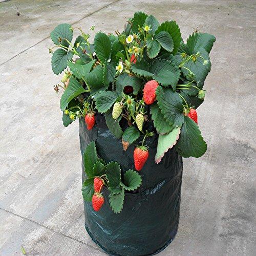 Lot de 10 sacs de plantation pour fraises