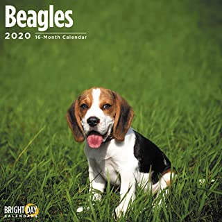 2020 Beagles 16 Month 12 x 12 Wall Calendar by Bright Day Calendars