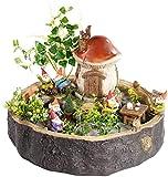 Royal Gardineer Mini Garten: Handgefertigter Pilzhaus-Zwergengarten, wasserfest (Gartenzwerge)