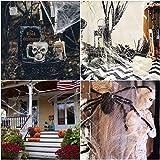 100g Halloween Dekoration Spinnennetz, 100g Dehnbaren Spinnennetzen und 100 Schwarzen Horrorspinnen Für Halloween Party Props - 3
