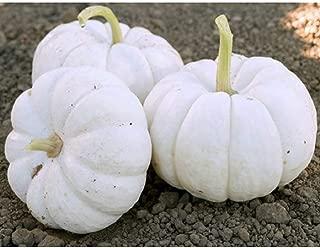 David's Garden Seeds Pumpkin Mini Gooligan 9163 (White) 25 Non-GMO, Hybrid Seeds
