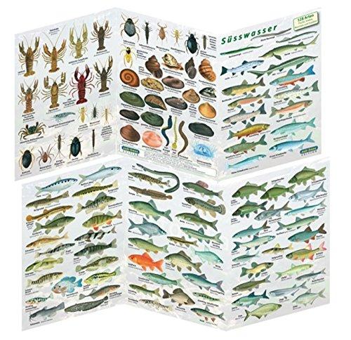 Fischfaltblatt Fischbestimmungskarte Faltblatt zur Fischbestimmung Mittelmeer, Süßwasser, Rotes Meer (Süßwasser)