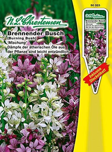 N.L. Chrestensen 50323 Brennender Busch Mischung (Blumensamen)