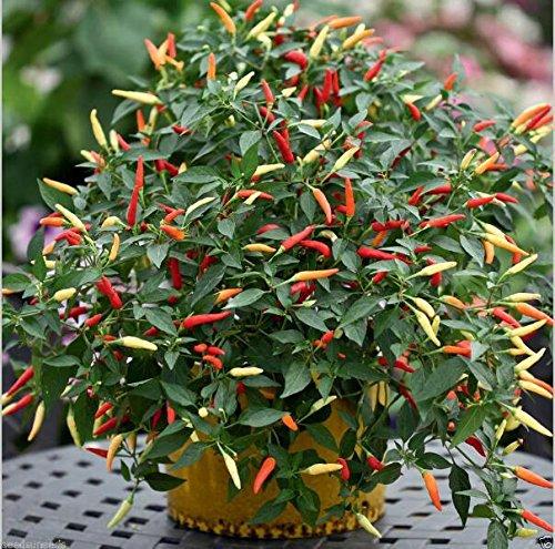 150pcs 16 couleurs mélangées Jaune Rouge Vert Blanc doux mélange de Bell Hot Pepper Graines Légumes Paprika semences * Plantes jardin Chilli