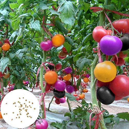 Catkoo Semillas, 120 Unids Semillas De Tomate Multicolores Jardín Jardín Planta De Cultivo Vegetal Fácil De Cultivar, Sin OGM, Rico En Vitamina C Semillas de Tomate Multicolores
