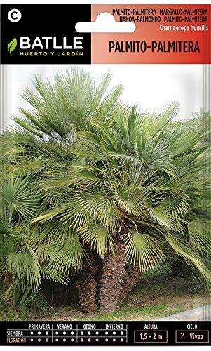 Semillas de Flores - Palmito-Palmitera - Batlle