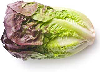 1,000 Seeds Lettuce Iceberg Improved Garden Heirloom